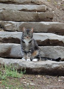 Kitty on Stone Steps; April